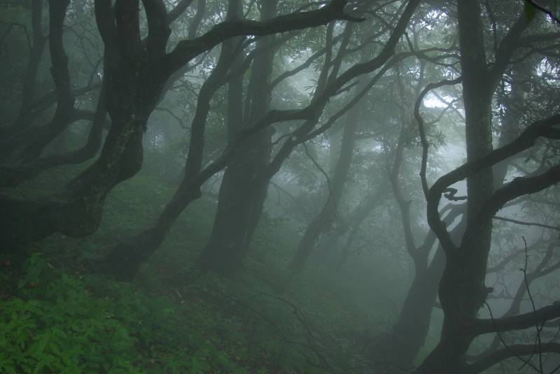 Symbolism Of The Forest Symbolreader