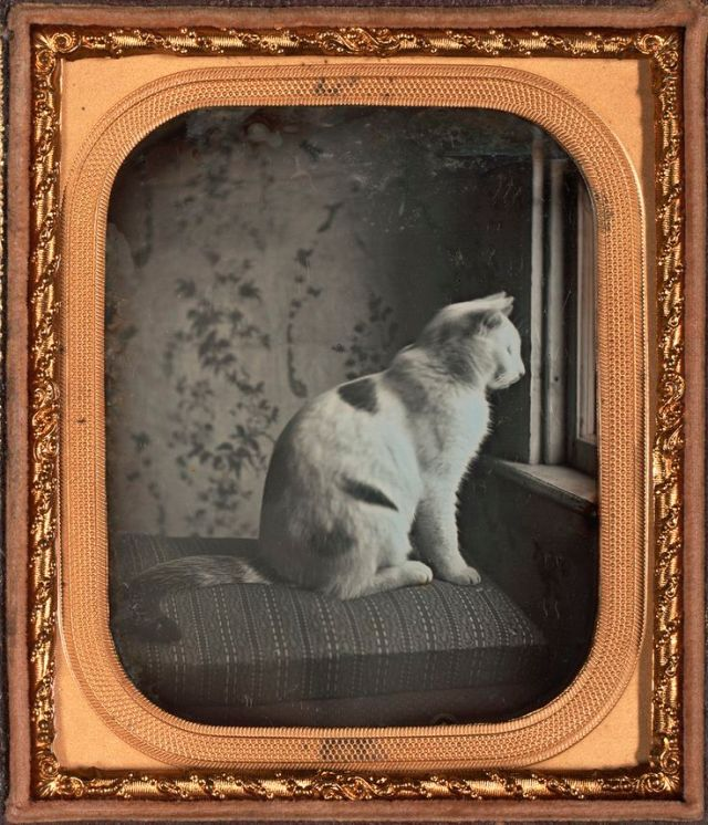 Subject worth of daguerreotype